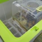 Biobest-hommelstadia2